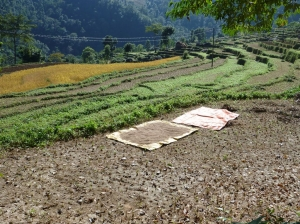 Rice fields on the way