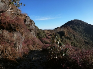 Rhododendrons on gosaikunda trek